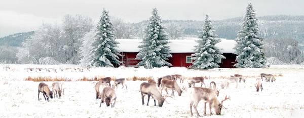 Au nord du cercle polaire   Conseils voyage Hiver finlandais