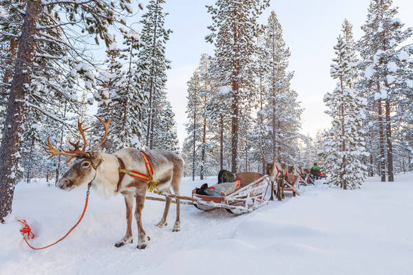 Faire un voyage en Laponie durant l'hiver : conseils et infos