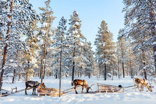 Islande / Laponie ou autre   Forum: Islande / Norvège   Forum Voyage