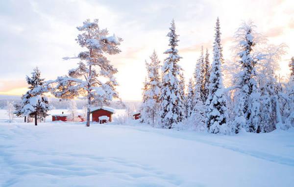 Voyage en Laponie : raid en traîneaux à chiens