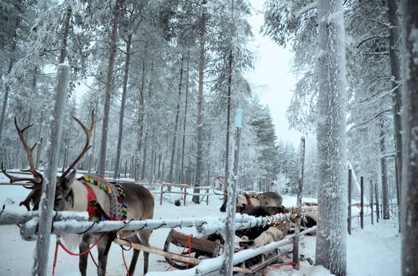 Tromso : la ville et ses activités en une semaine ! Explorer le Grand Nord