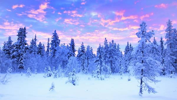 Voyage en Laponie : séjour chiens de traîneau Laponie - Sport