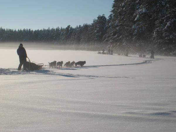 Voyage en Laponie : tous mes conseils et astuces